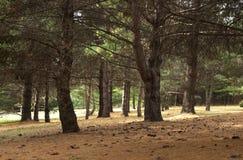 Bosque del parque Fotos de archivo