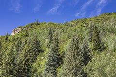 Bosque del parque de estado de Paonia, Paonia, Colorado Fotografía de archivo