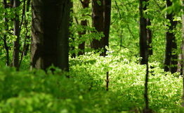 Bosque del pie Fotos de archivo