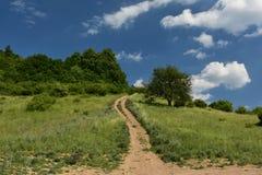 Bosque del pie Imagen de archivo