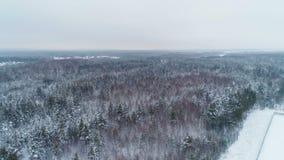 Bosque del pino cubierto con nieve cerca de la subestación de la distribución almacen de metraje de vídeo