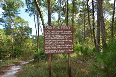 Bosque del pino de la arena Fotos de archivo libres de regalías