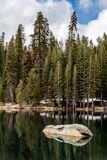 Bosque del pino, del abeto y de la secoya en un lago Foto de archivo libre de regalías