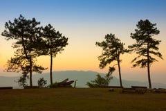 Bosque del pino en crepúsculo Fotografía de archivo