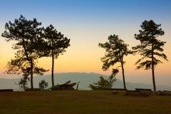 Bosque del pino en crepúsculo Foto de archivo