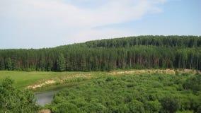 Bosque del pino en el banco de un pequeño río Imagen de archivo libre de regalías
