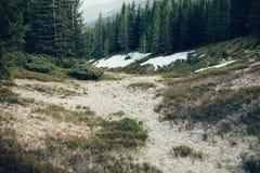 Bosque del pino en la montaña Foto de archivo libre de regalías