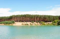 Bosque del pino en la playa arenosa en las orillas del lago Fotografía de archivo