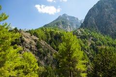 Bosque del pino en las montañas Samaria Gorge Crete, Grecia Paisaje hermoso de la montaña fotografía de archivo libre de regalías