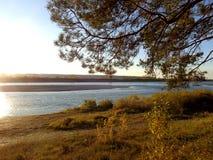 Bosque del pino en los rayos del sol de determinación del otoño en la orilla del río foto de archivo