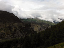 Bosque del pino en un paisaje Himalayan Foto de archivo libre de regalías