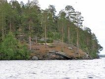 bosque del pino en una orilla del río rocosa Fotografía de archivo libre de regalías