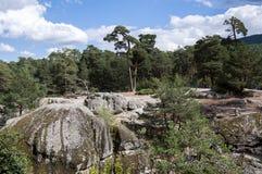 Bosque del pino escocés al lado del río Eresma Foto de archivo libre de regalías