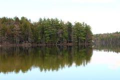 Bosque del pino por el agua con la reflexión clara del agua imágenes de archivo libres de regalías