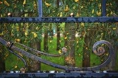 Bosque del pino y la cerca forjada Imágenes de archivo libres de regalías