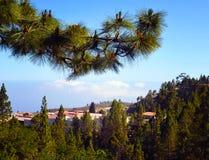 Bosque del pino y nubes blancas hermosas en el horizonte en el pueblo de montaña de Vilaflor, Tenerife, islas Canarias, España Foto de archivo libre de regalías