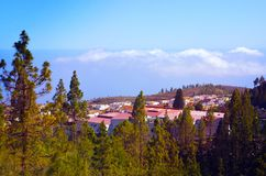 Bosque del pino y nubes blancas hermosas en el horizonte en el pueblo de montaña de Vilaflor, Tenerife, islas Canarias, España Imagen de archivo libre de regalías
