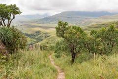 Bosque del Protea en el rastro de la roca del puesto de observación a Mahai Imagen de archivo libre de regalías