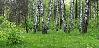 Bosque del resorte Imagenes de archivo