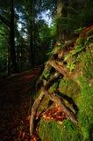 Bosque del resorte Fotos de archivo