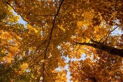Bosque del roble del otoño foto de archivo libre de regalías