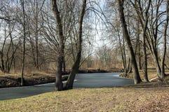 Bosque del stran de Nemosicka en finales invierno, luz del sol en ramas, manera en sorprender el área natural, lago de oxbow Fotos de archivo libres de regalías