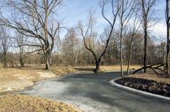 Bosque del stran de Nemosicka en finales invierno, luz del sol en ramas, manera en sorprender el área natural, lago de oxbow Fotografía de archivo libre de regalías