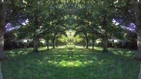 Bosque del treeline de Timelaps almacen de video