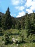 Bosque del valle de la montaña Imagen de archivo libre de regalías