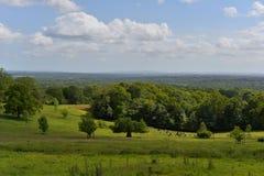 Bosque del valle verde Imagenes de archivo