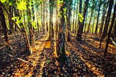 Bosque del verano Imagen de archivo libre de regalías