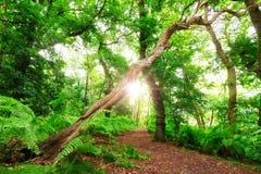 Bosque del verano de la fantasía Foto de archivo libre de regalías