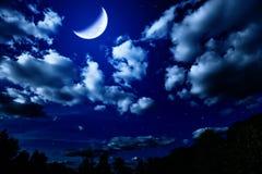 Bosque del verano de la noche con y luna Fotografía de archivo libre de regalías