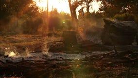 Bosque del verano después del desastre del fuego almacen de metraje de vídeo