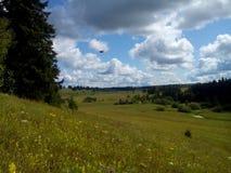 Bosque del verano en el conjunto de verdor y de belleza Imágenes de archivo libres de regalías