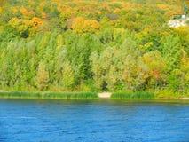 Bosque del verano en la orilla del río Fotografía de archivo libre de regalías