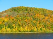 Bosque del verano en la orilla del río Imagenes de archivo