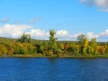 Bosque del verano en la orilla del río Foto de archivo libre de regalías