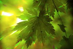 Bosque del verano, rayos del arco iris Imagen de archivo