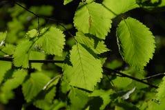 Bosque del verde de Clode-up Imagenes de archivo