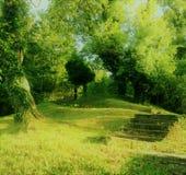 Bosque del verde de hadas Foto de archivo libre de regalías