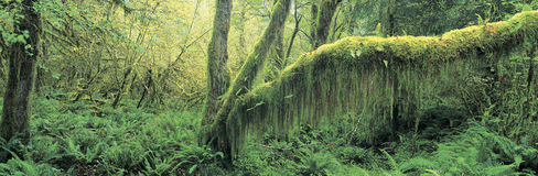 Bosque del viejo crecimiento Imagen de archivo libre de regalías