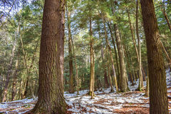 bosque del Viejo-crecimiento Fotografía de archivo