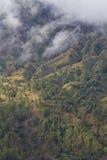 Bosque del volcán Imágenes de archivo libres de regalías