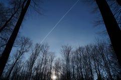 Bosque delante del cielo azul Fotos de archivo libres de regalías