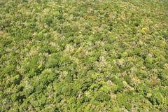 Bosque denso. imagen de archivo