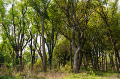Bosque denso Fotos de archivo libres de regalías