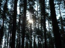 Bosque denso Imagen de archivo