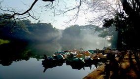 Bosque denso del paseo de la buena mañana de la mañana del parque nacional de Bombay en el corazón de los árboles del verde de Bo Fotos de archivo