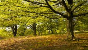 Bosque denso en el resorte Foto de archivo libre de regalías